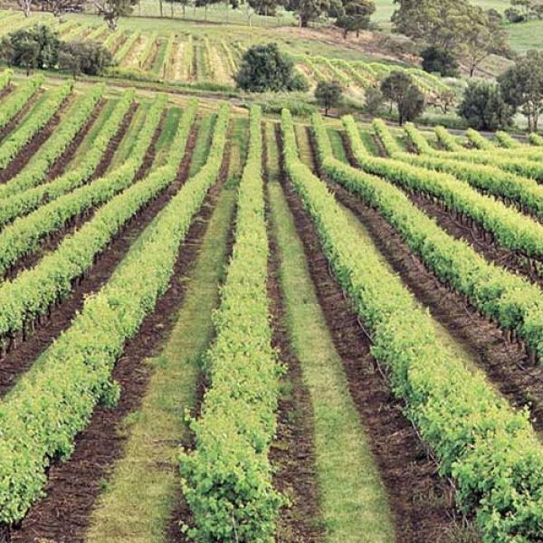 Wine Tour at Nemea from Nafplio